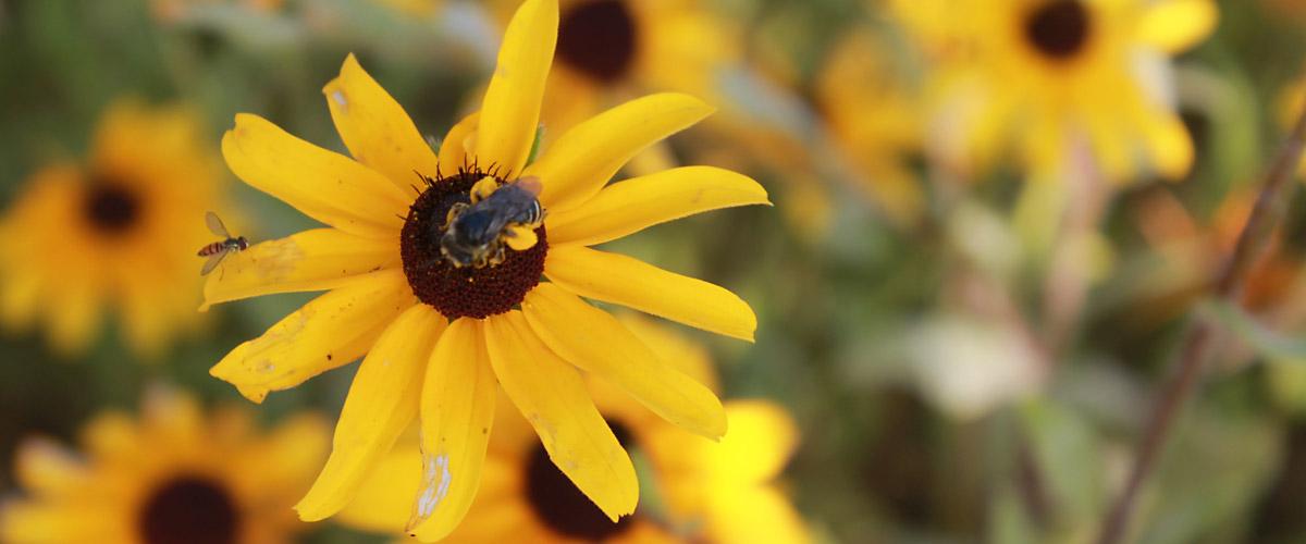 pollinators_1200by500
