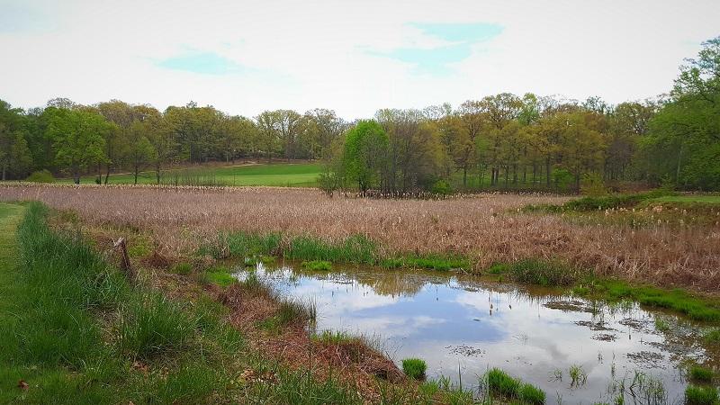 WetlandArea2